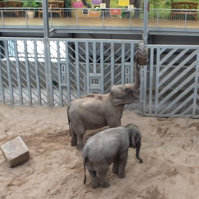 Feeding Elephants in Blackpool Zoo from a verlinde hoist